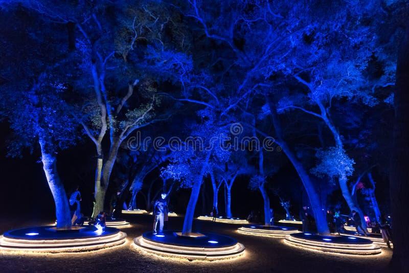 Enchanté : Forêt de la lumière - arbres admirablement lumineux dans l'obscurité photos stock