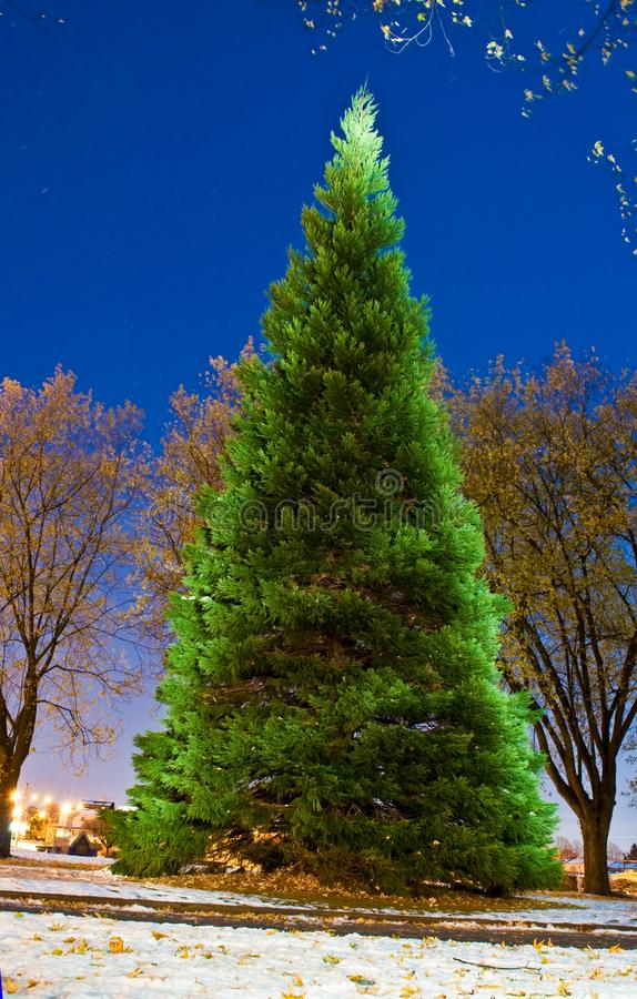 Download Enchanted Christmas Tree stock image. Image of bright - 22092233
