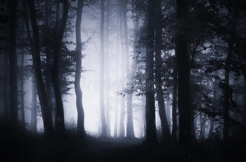Enchanted dark woods with fog and mysterious light stock image
