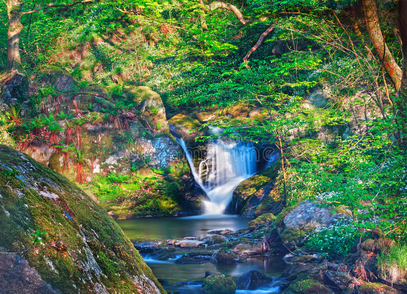 Enchanted fairytale forest stock image