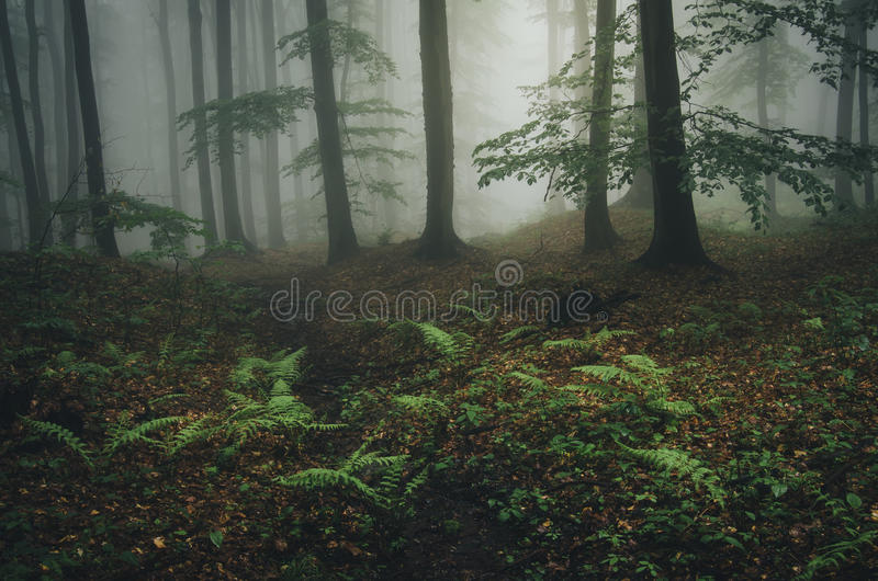 Enchanted fantasy forest with fog and green fern stock photos