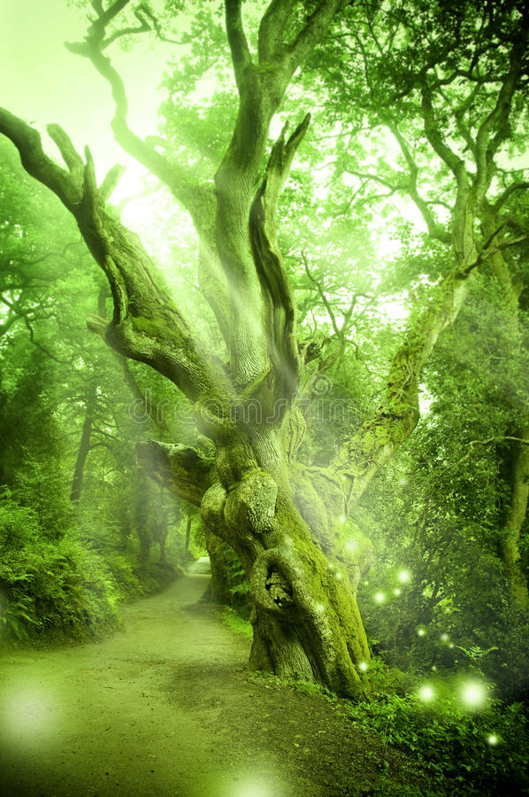 Free Enchanted Forest Royalty Free Stock Photography - 15728067