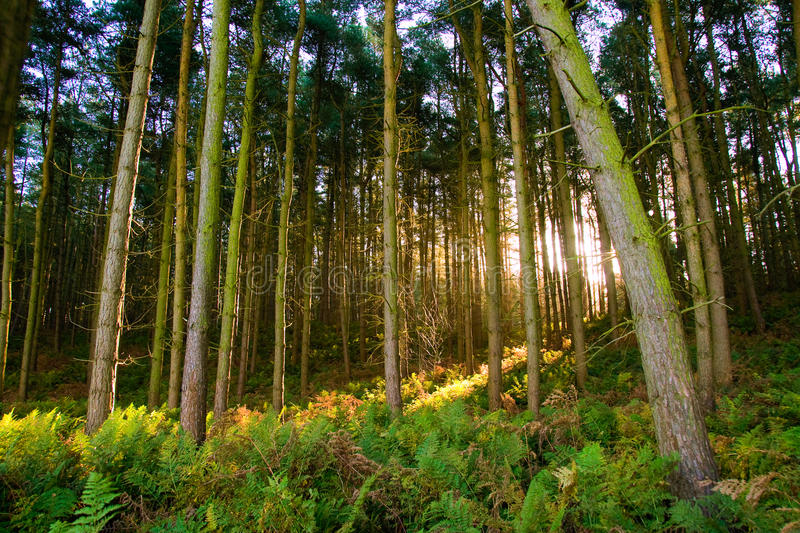 Download Enchanted forest stock photo. Image of trees, light, autumn - 17466360