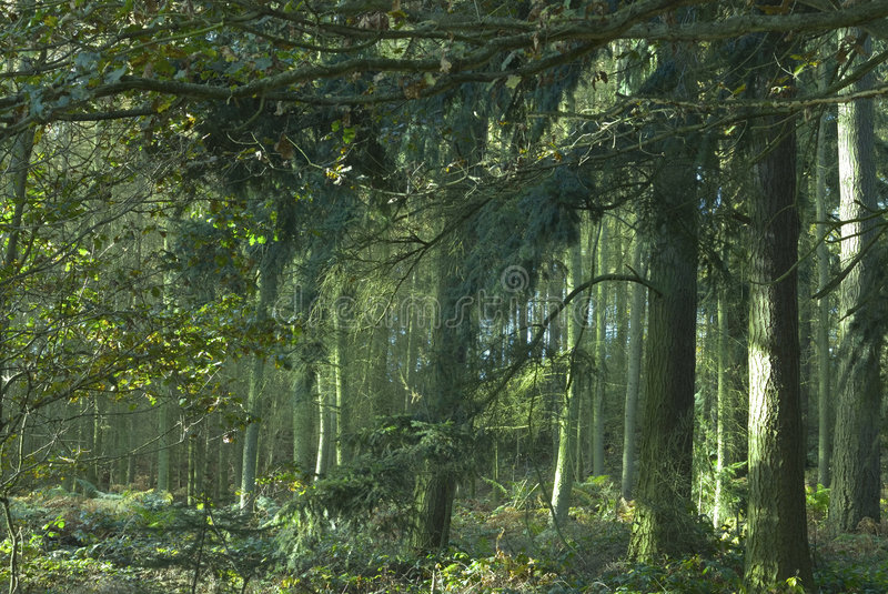 Download Enchanted Forest Stock Image - Image: 3608901
