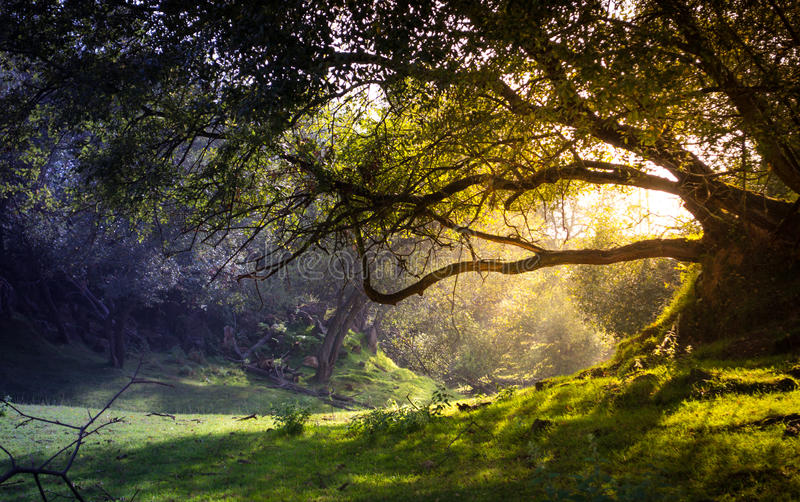 Enchanted forest royalty free stock images