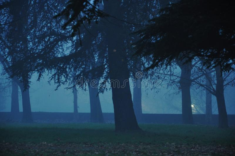 Enchanted forest stock photos