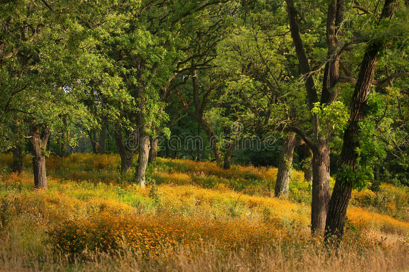 Download Enchanted Forest Covered In Yellow Disies. Stock Image - Image: 6208245