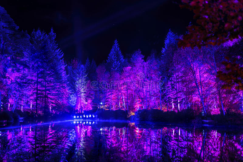 Enchanted Forest royalty free stock photography