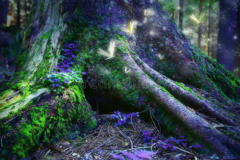 Enchanted forest with magic fireflies. Magic surreal enchanted forest with fireflies royalty free stock image
