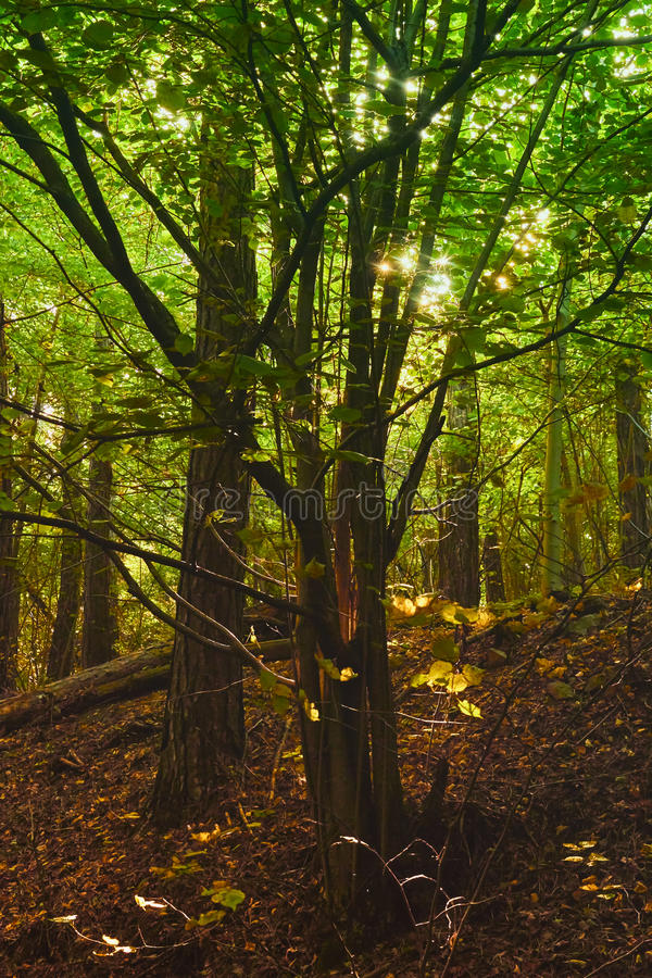 Enchanted forest stock photography