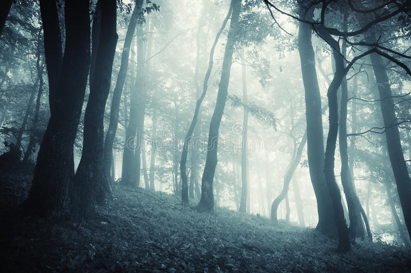 Enchanted mystical fantasy forest with fog. Dark enchanted mystical fantasy forest with blue fog stock photos