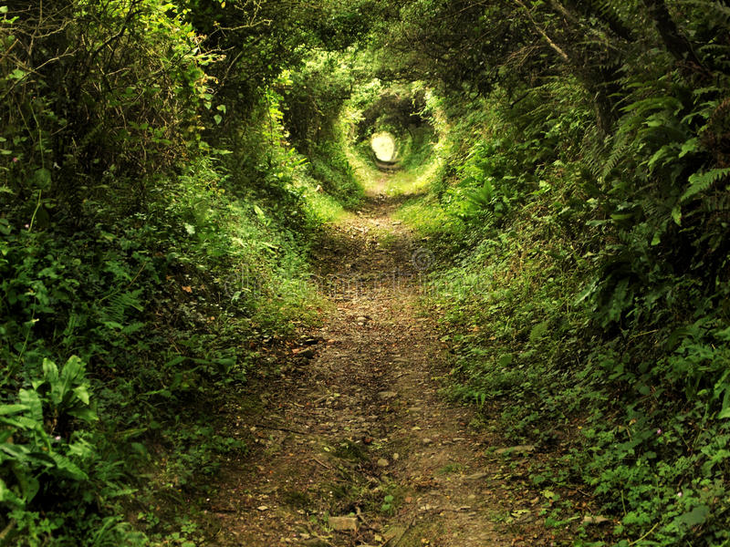 Enchanted tunnel path in the forest royalty free stock image