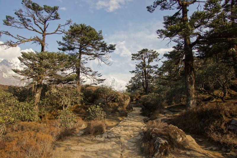 Enchanting Asian forest landscape stock image