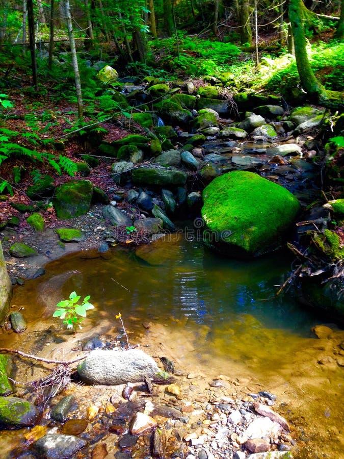 Enchanting River Grove royalty free stock photography