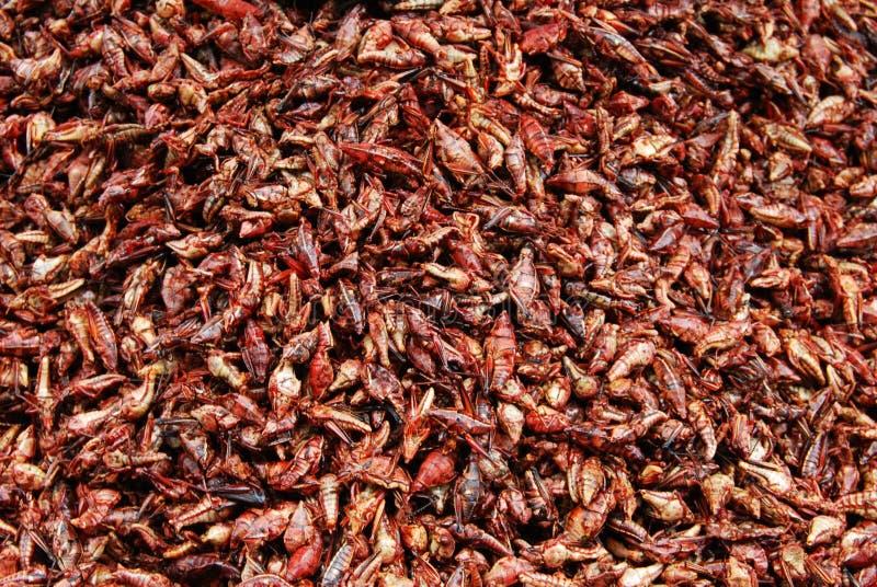 Enchilados de Chapulines, saltamontes comestibles con el chile imagen de archivo