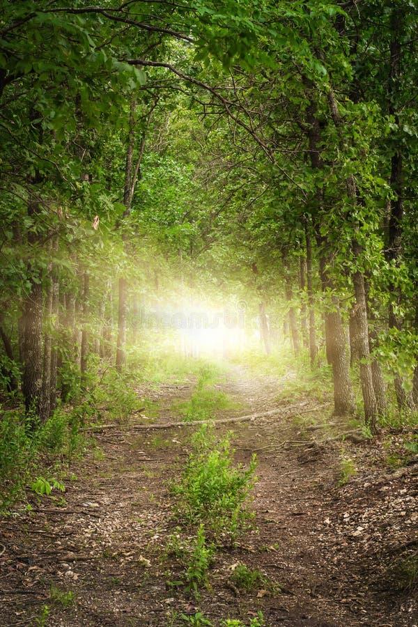 Enciéndase en el extremo de una trayectoria de bosque enselvada imagen de archivo libre de regalías