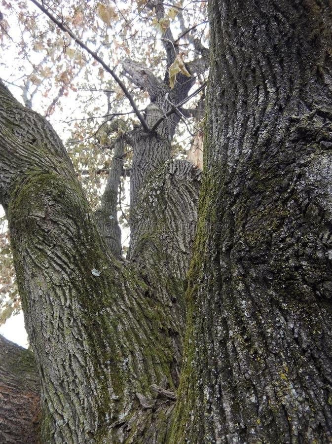 Encima del árbol fotos de archivo libres de regalías