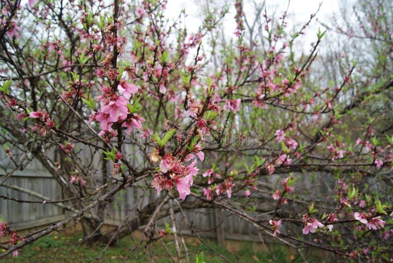 Encima del cierre del árbol de la flor imágenes de archivo libres de regalías