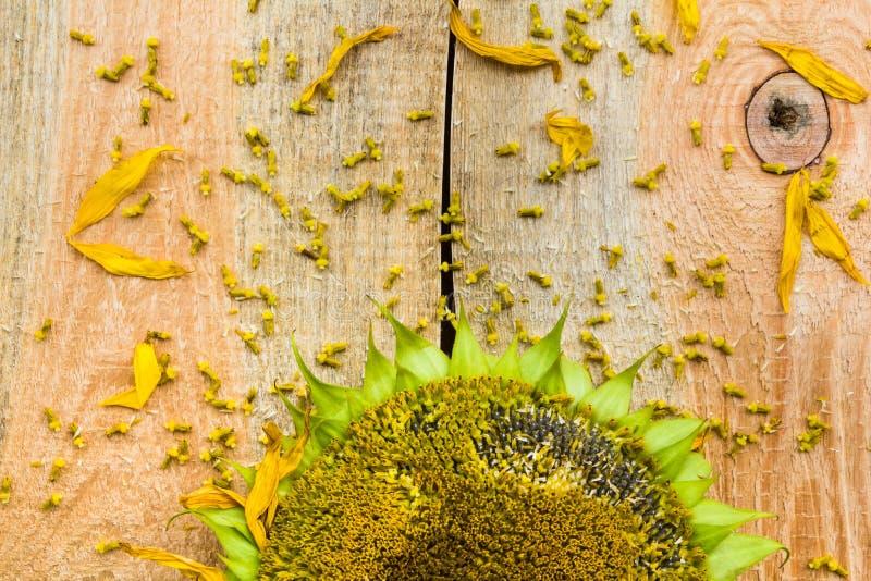 Encimera de madera de las semillas de girasol de la flor del fondo foto de archivo libre de regalías
