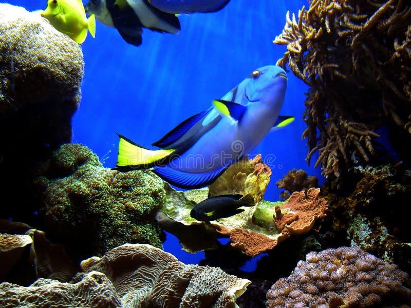 Encontrar el Dory de Nemo fotos de archivo libres de regalías
