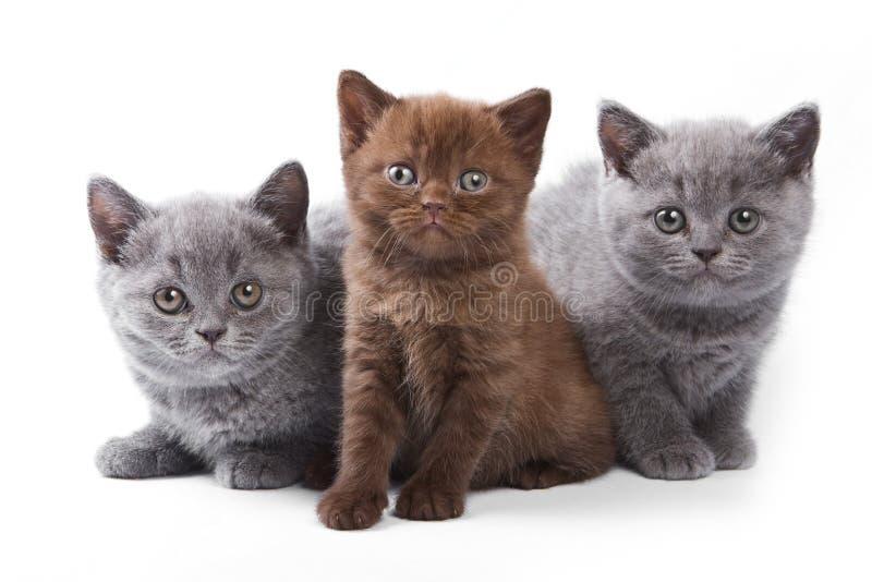 Encontro de diversos gatinhos imagem de stock
