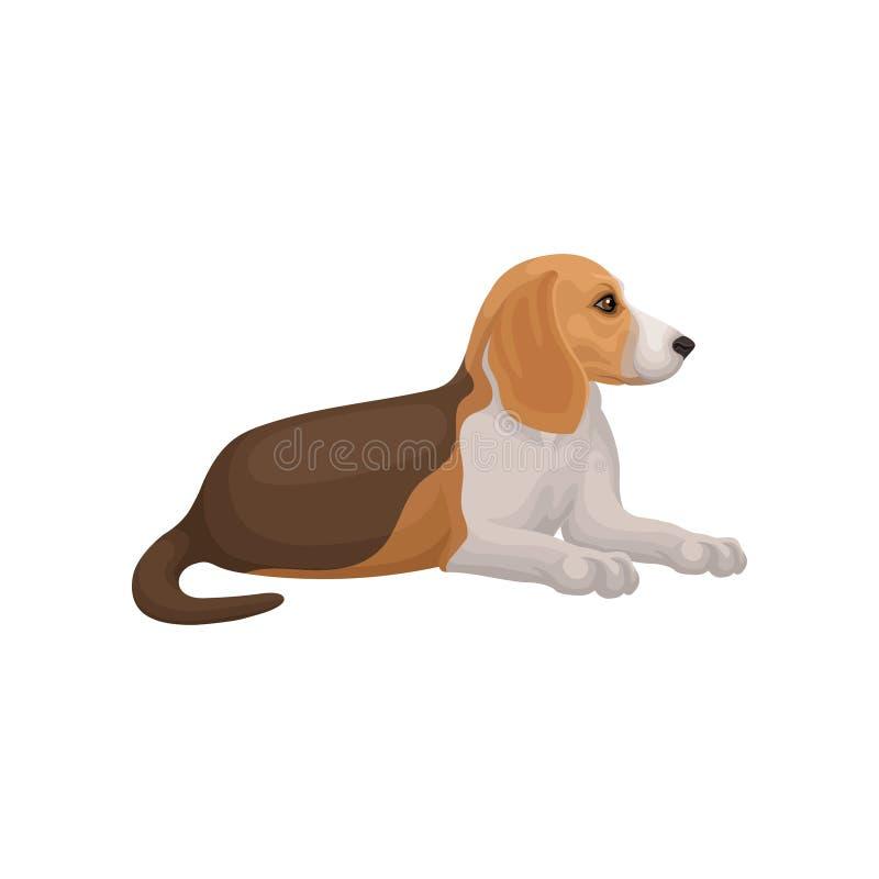 Encontro do cão do lebreiro isolado no fundo branco Animal doméstico com cabelo curto Vetor liso para anunciar o cartaz de ilustração stock