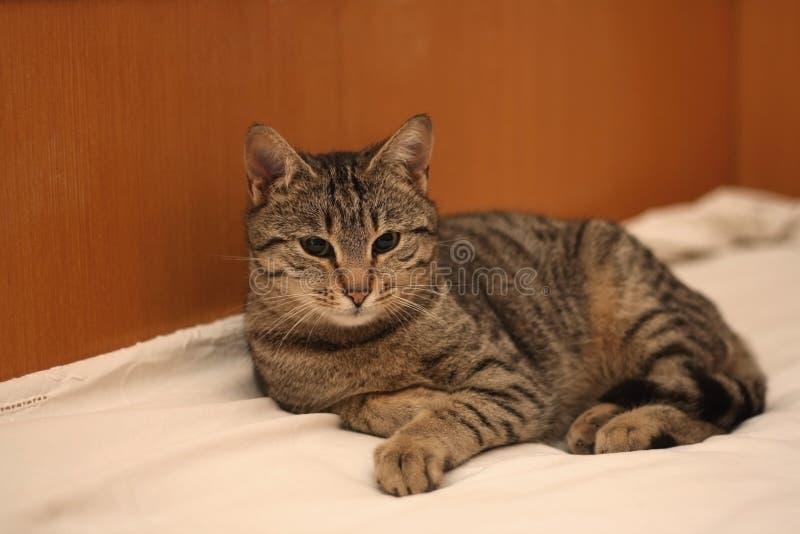 Encontro do gato fotos de stock royalty free