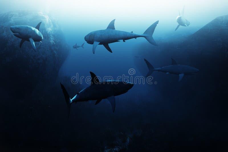 Encontro do tubarão, grande escola dos tubarões que patrulham debaixo d'água ilustração royalty free
