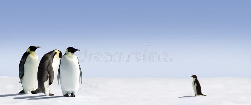 Encontro dos pinguins imagens de stock
