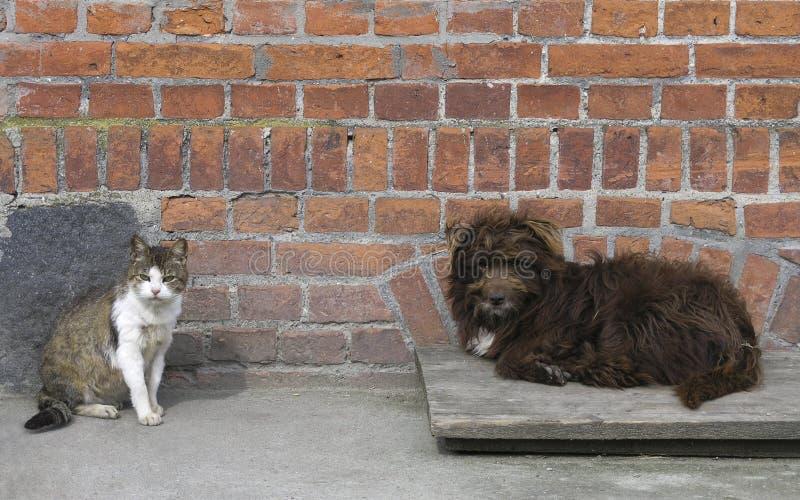 Encontro marrom desgrenhado do cão e posição cinzento-branca do gato fotografia de stock royalty free