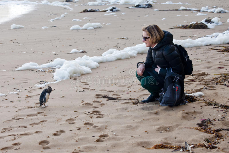 Encontro próximo com um pinguim batido por ondas na praia