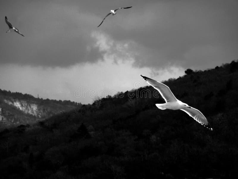 encounter fotografering för bildbyråer