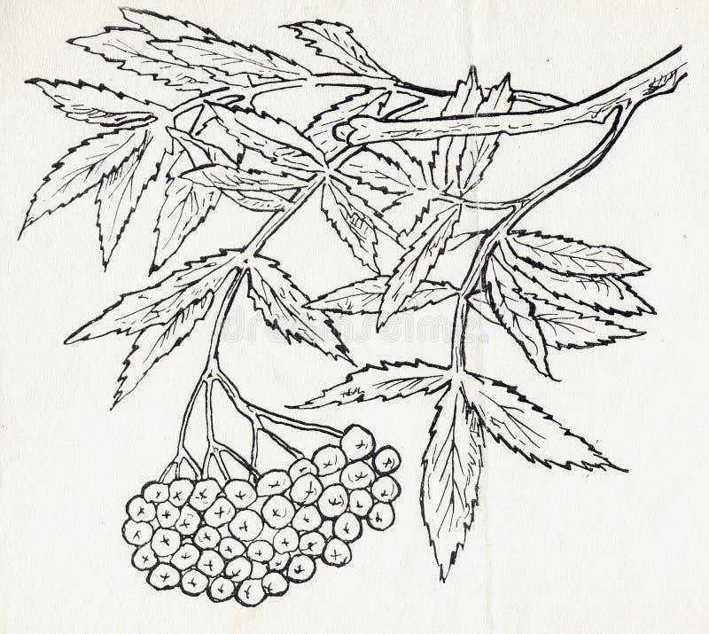 Encre dessinant un arbre photos stock