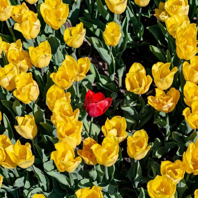 Encuentre la diferencia en una cama de flor imágenes de archivo libres de regalías