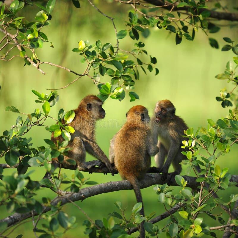 Encuentro de los monos fotos de archivo libres de regalías