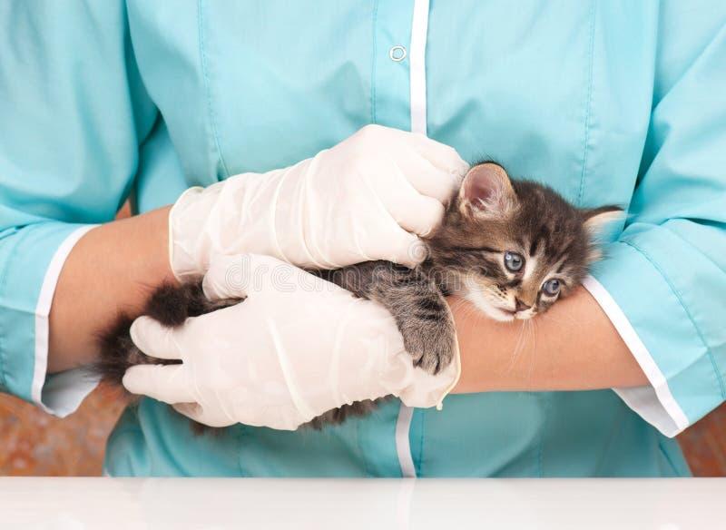 Encuesta veterinaria fotos de archivo libres de regalías