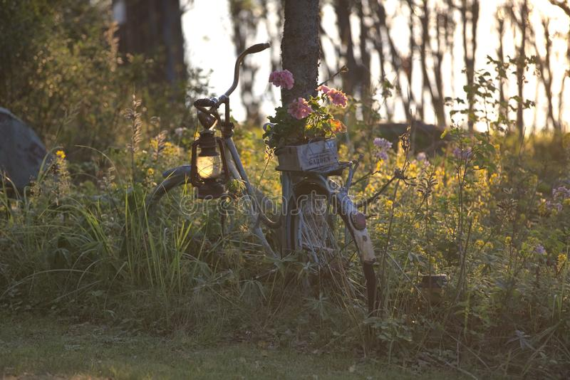 Vintage bicycle in bucolic and relaxing scandinavian garden royalty free stock images