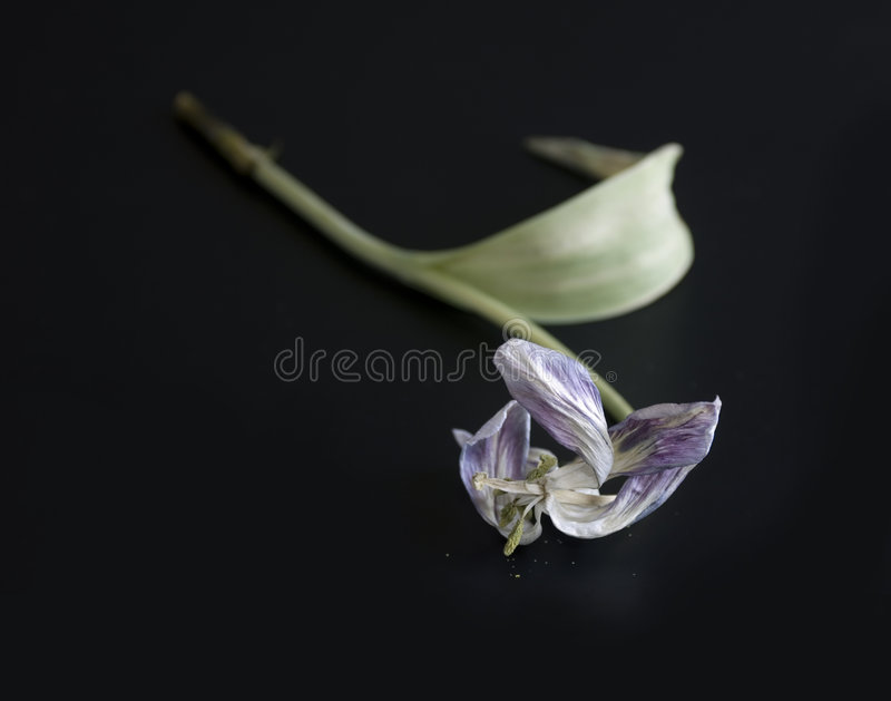 End of Life royalty free stock images