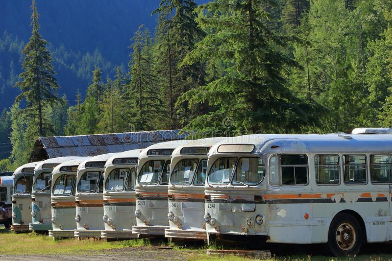 End of the Line - Historic Buses at Sandon, B.C. Old Vancouver city buses at their final resting place in Sandon Ghost Town in the interior of British Columbia royalty free stock images