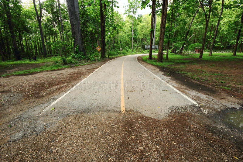 Download End of road in forest stock image. Image of lane, dividing - 25181749