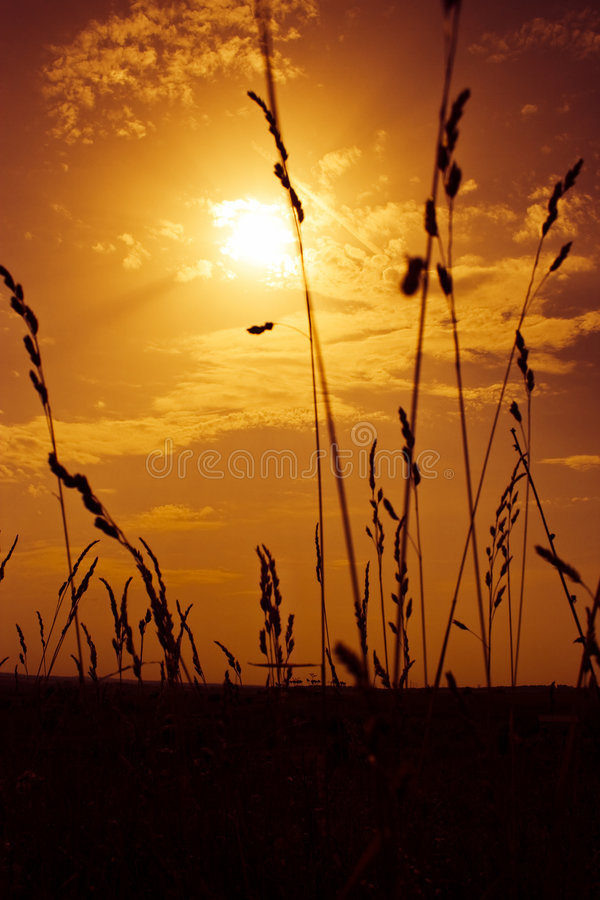 End of summer. Beauty summer sunset on field. Warm soft golden colors & silhouettes of plants stock image