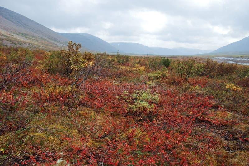 Colorful tundra. stock photo