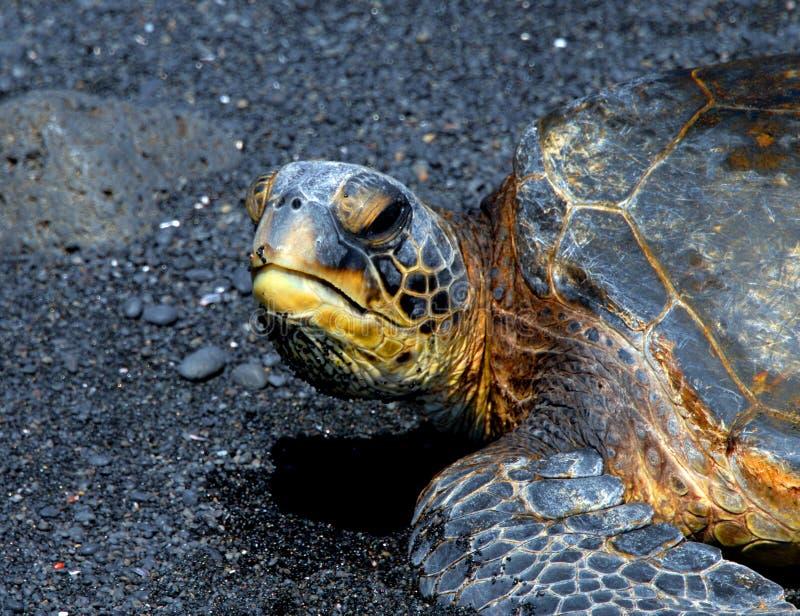 Download Endangered List Stock Images - Image: 24722364