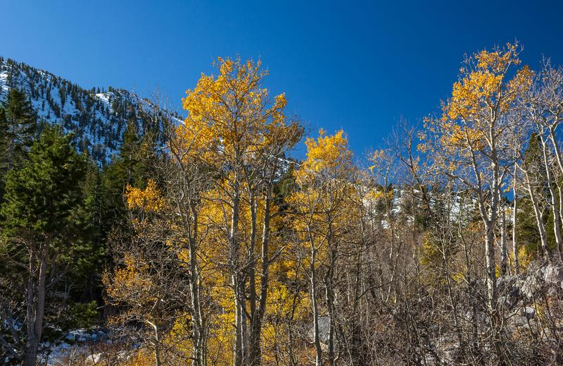 Ende der Herbstsaison, Winter bewegt sich in die Berge lizenzfreie stockbilder
