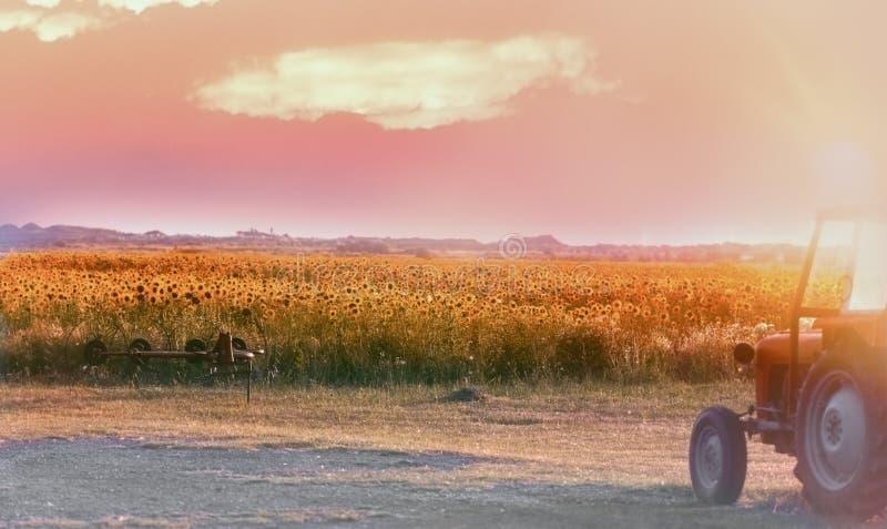 Ende des Tages auf dem landwirtschaftlichen Gebiet nach der Arbeit wird - auf dem Sonnenblumenfeld abgeschlossen lizenzfreie stockfotos