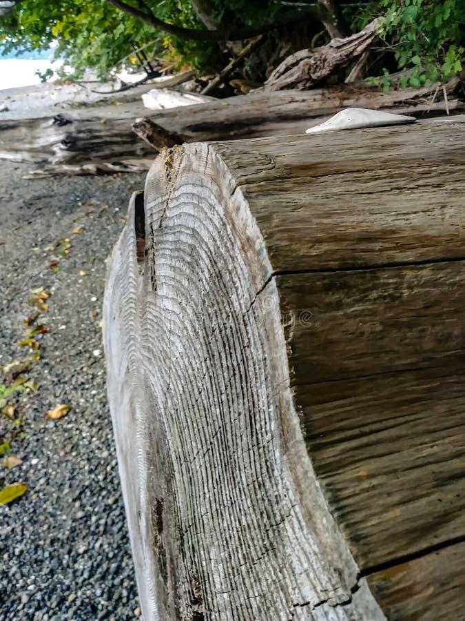 Ende des Treibholzklotzes entlang Küstenlinienstrand stockbilder