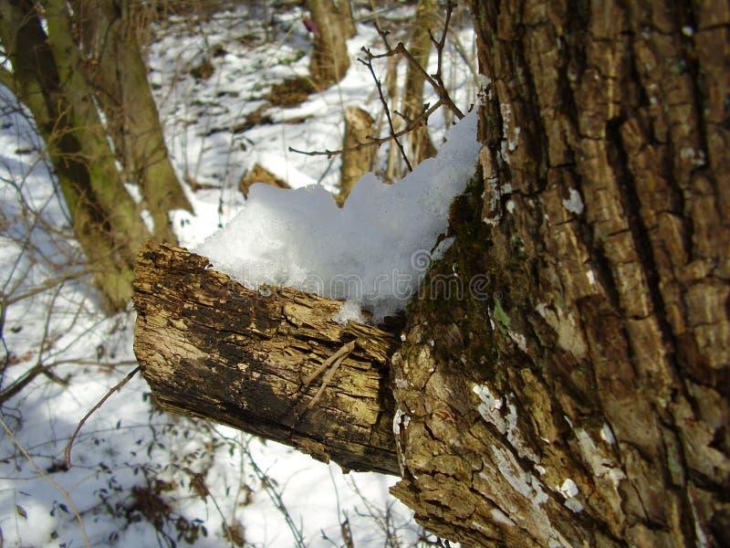 Ende des Winters stockfotografie