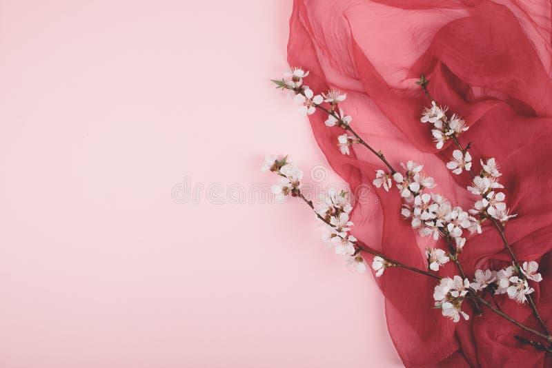 Endecha del plano con las flores florecientes de Sakura de la cereza en pastel rosado y fondo púrpura Fondo del rosa de la muchac fotos de archivo libres de regalías