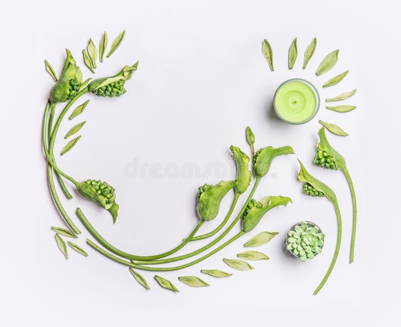 Endecha plana botánica verde con el espacio de la copia Hojas, plantas suculentas, flores verdes y velas en el fondo blanco, visi imagen de archivo libre de regalías