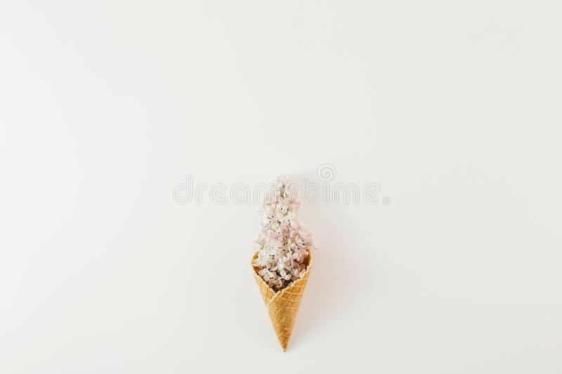 Endecha plana de la primavera m?nima blanca del fondo de las flores de la rama del cono de helado de la visi?n superior libre illustration